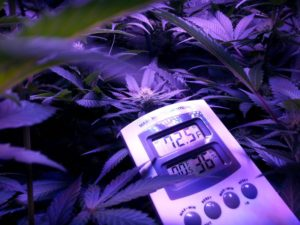 Kingston Herb Lush LED Garden Temperature and Humidity are Perfect