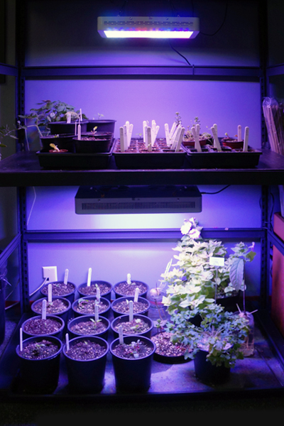 This is where we start clones and germinate seeds.